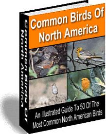 Ebook cover: Common Birds of North America
