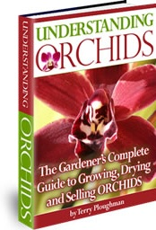 Ebook cover: Understanding Orchids