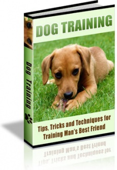 Ebook cover: 90 Dog Training Tips