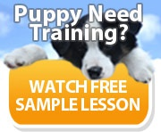 Ebook cover: Puppy and Dog Training