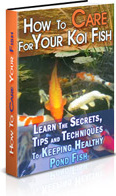 Ebook cover: How To Care For Your Koi Fish
