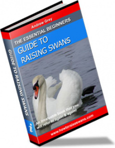 Ebook cover: The Essential Beginners Guide To Raising Swans