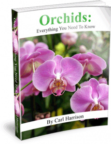 Ebook cover: Orchids: Everything You Need To Know
