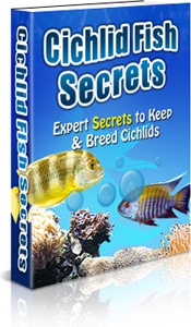 Ebook cover: Cichlid Fish Secrets