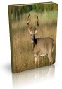 Ebook cover: Quick Antler Scoring At The Critical Moment