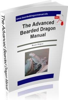 Ebook cover: Advanced Bearded Dragon Manual