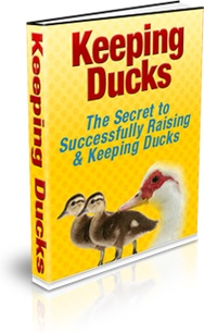 Ebook cover: Keeping Ducks