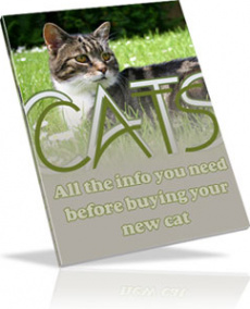 Ebook cover: All About CATS