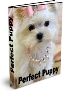 Ebook cover: Perfect Puppy