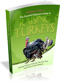 Ebook cover: The Essential Beginners Guide To Raising Turkeys