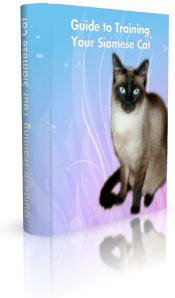 Ebook cover: Guide to Training Your Siamese Cat