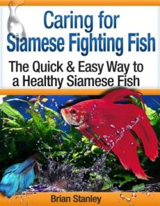 Ebook cover: Breeding Siamese Fighting Fish