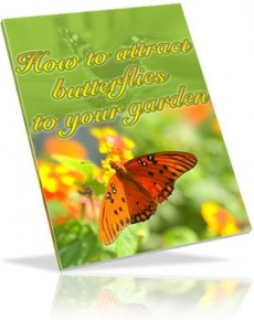 Ebook cover: How to Attract Butterflies to Your Garden