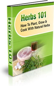 Ebook cover: Herbs 101
