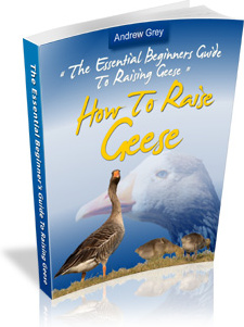 Ebook cover: The Essential Beginners Guide To Raising Geese