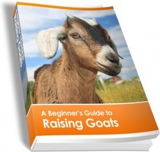 Ebook cover: A Beginners Guide To Raising Goats
