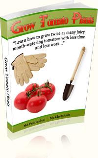 Ebook cover: Grow Tomato Plants
