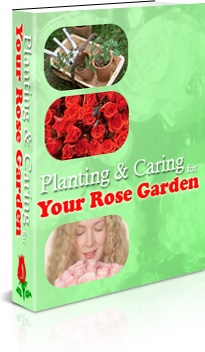 Ebook cover: The Planting & Caring for Your Rose Garden