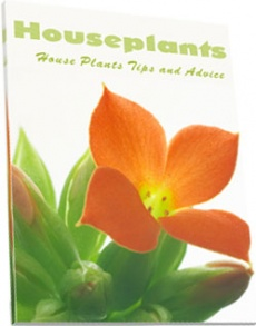 Ebook cover: House Plants