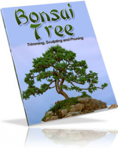 Ebook cover: Bonsai Trees: Growing, Trimming, Pruning, and Sculpting