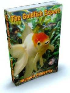 Ebook cover: The Goldfish Expert