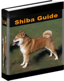Ebook cover: Love Your Shiba: The Only Book on Shiba's You'll Ever Need