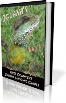 Ebook cover: Iguanas - Your Complete Iguana Survival Guide