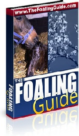 Ebook cover: The Foaling Guide.
