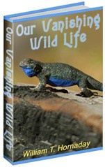 Ebook cover: Our Vanishing Wild Life