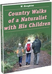 Ebook cover: Country Walks of a Naturalist with His Children