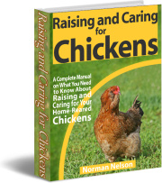 Ebook cover: Raising and Caring for Chickens