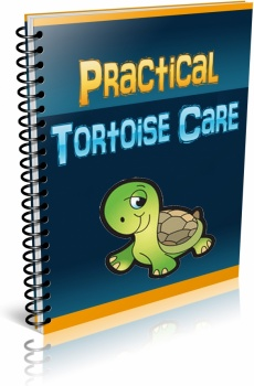 Ebook cover: Practical Tortoise Care