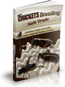 Ebook cover: Crickets Breeding Made Simple