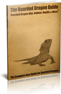 Ebook cover: The Bearded Dragon Guide