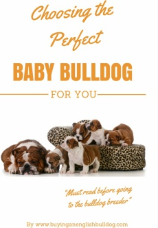 Ebook cover: Choosing the Perfect Baby Bulldog For You