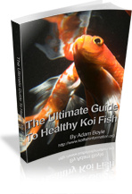 Ebook cover: The Ultimate Guide To Healthy Koi Fish
