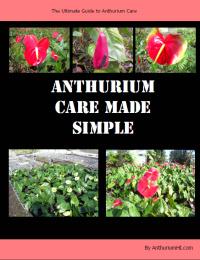 Ebook cover: Anthurium Care Made Simple