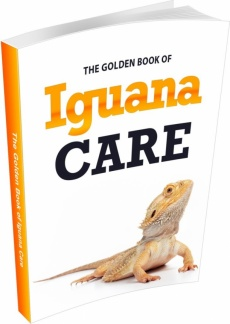 Ebook cover: The Golden Book of Iguana Care