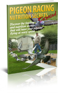 Ebook cover: Pigeon Racing Nutrition Secrets Exposed