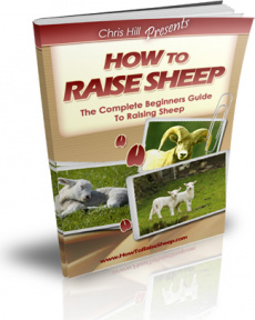 Ebook cover: How to Raise Sheep