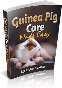 Ebook cover: Guinea Pig Care Made Easy