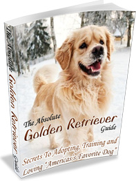 Ebook cover: The Absolute Golden Retriever Guide