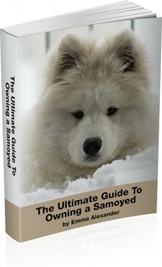 Ebook cover: The Ultimate Guide To Owning a Samoyed
