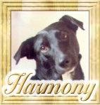 Ebook cover: The Harmony Program
