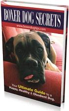 Ebook cover: Boxer Dog Secrets