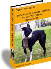 Ebook cover: Boston Terrier Puppies