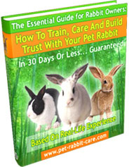 Ebook cover: How To Train, Care and Build Trust With Your Pet Rabbit