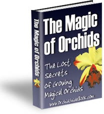 Ebook cover: The Magic of Orchids