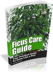 Ebook cover: Ficus Care