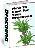 Ebook cover: How To Care for Your Dracanea